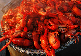 how to fish with crawdads